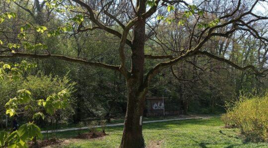 Mapiranje Trešnjevke – šetnja